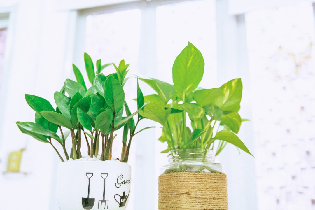 Two planters with tall green leafy plants
