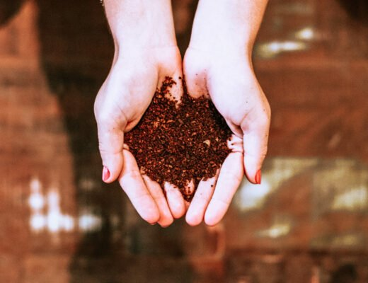 Holding soil in my hands: how to rot at home
